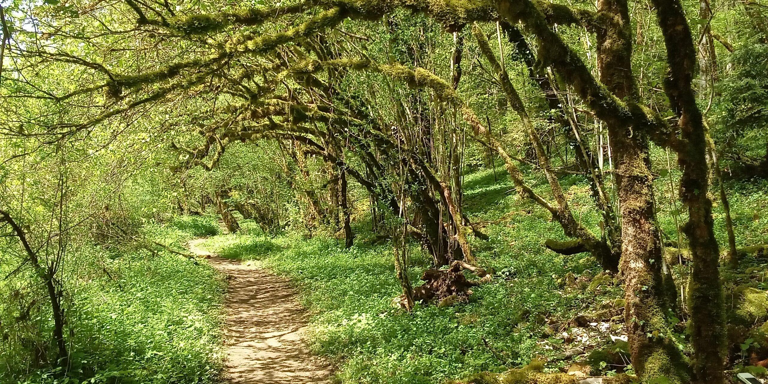 Wanderweg der Route 2 und 95 entlang des Doubs JU